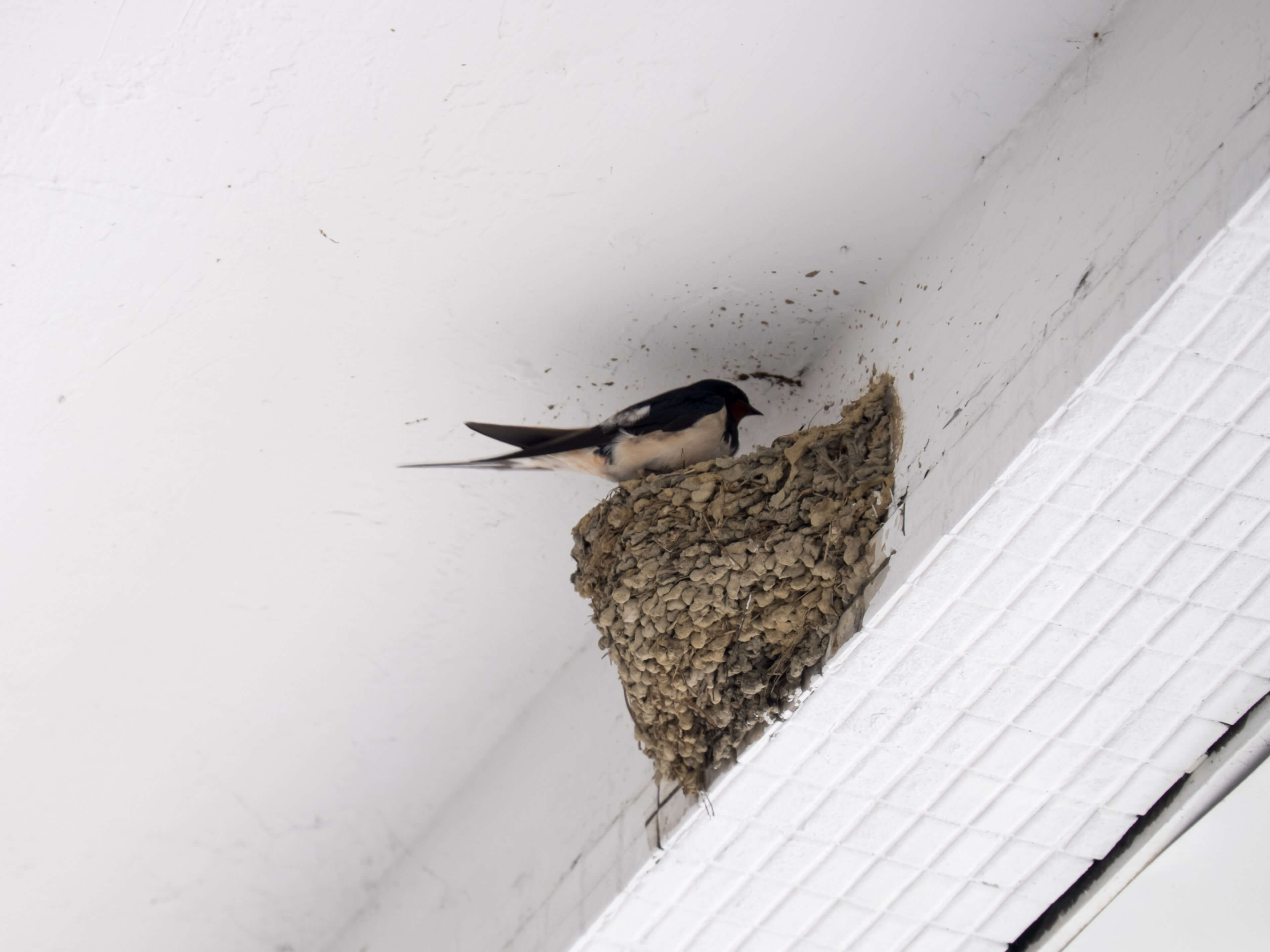 Wildlife That Damages Roofs And Homes Beneficial Roofing